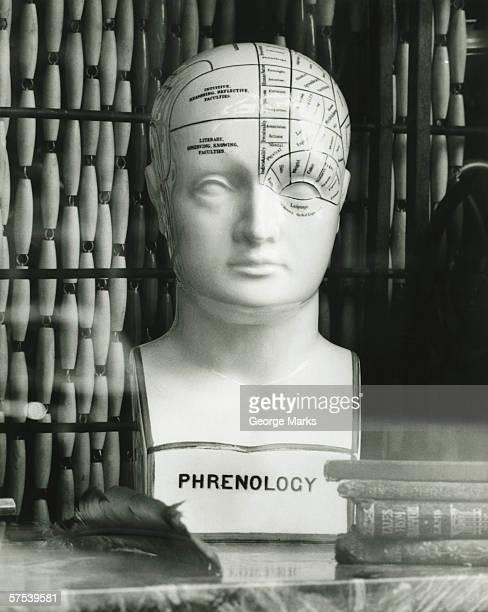 Model of head with phrenological descriptions, (B&W)