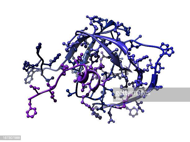 Model of HIV Protease