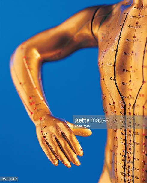 Model of human arm and chest with acupuncture points