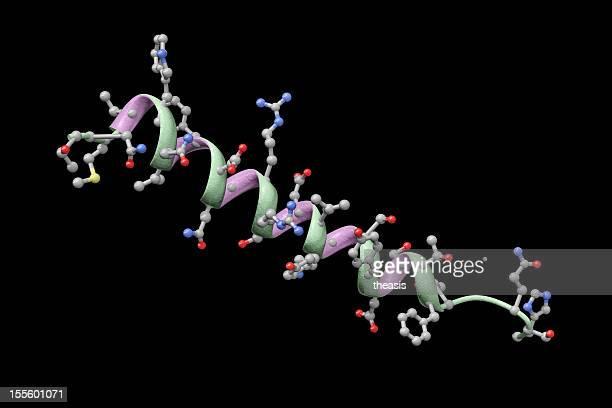 modelo de glucagón humanos - theasis fotografías e imágenes de stock