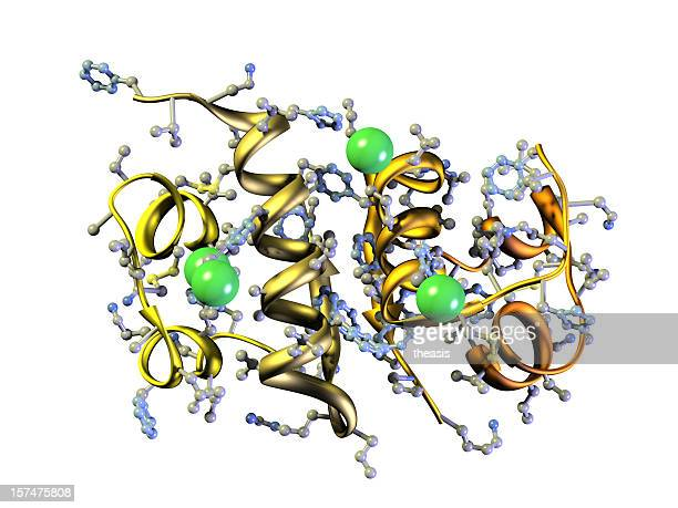 Modelo de la insulina humana