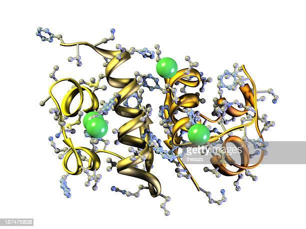 Model of Human Insulin