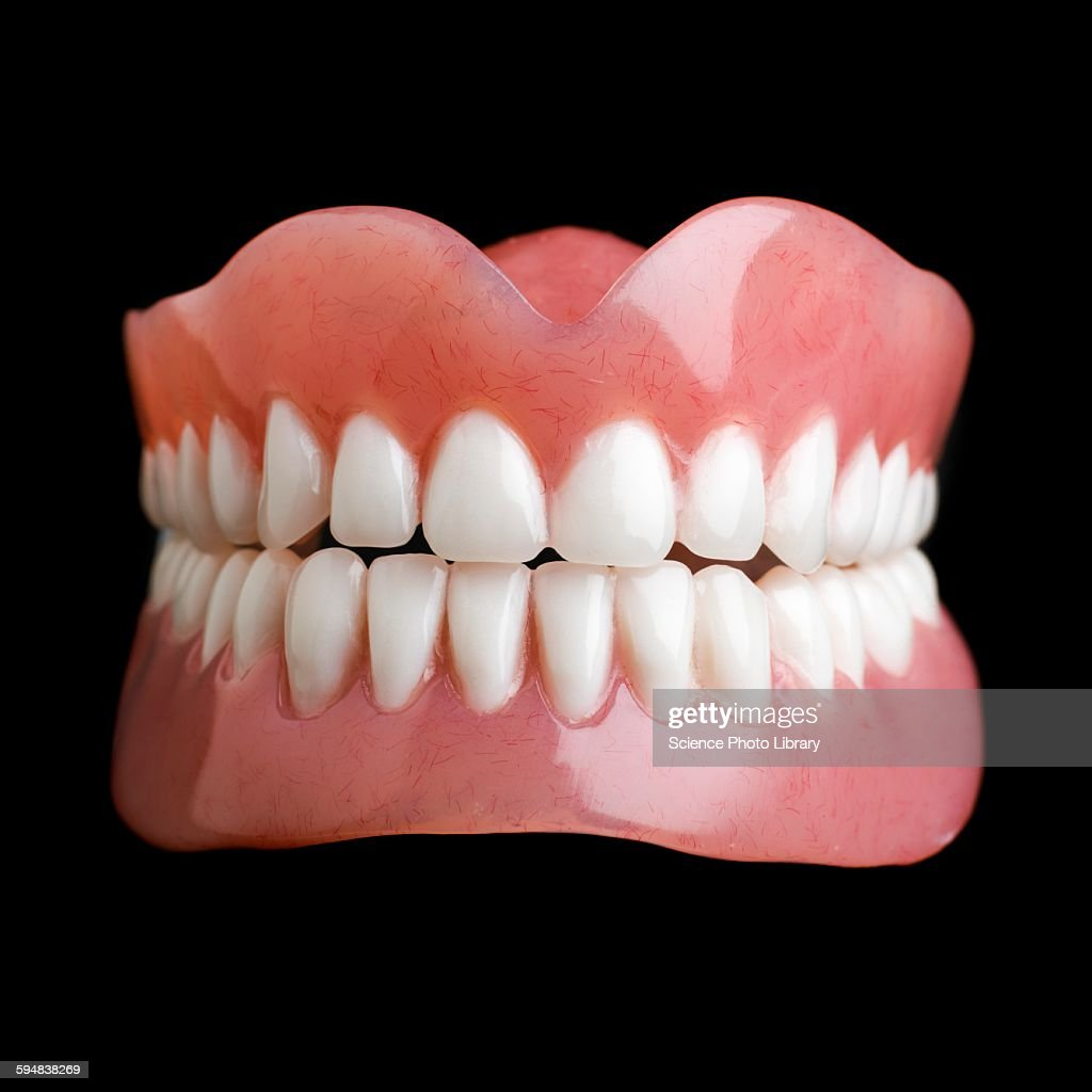 Model Of Human Teeth Stock Photo Getty Images