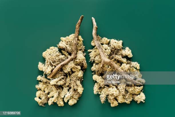 a model of the human organ of the lungs made of branches and forest moss - emerald green stock pictures, royalty-free photos & images