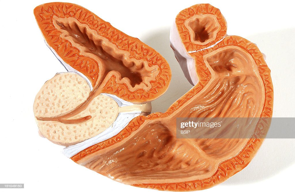Anatomy Male Genitalia Pictures Getty Images