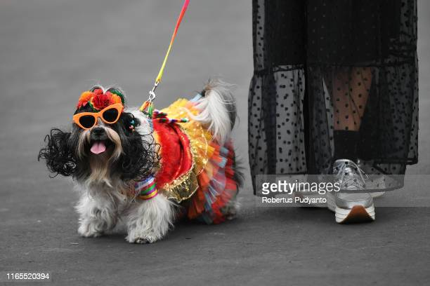 A model performs with a dog during Pets Carnival as part of the 18th Jember Fashion Carnival 2019 on August 01 2019 in Jember Indonesia The 18th...