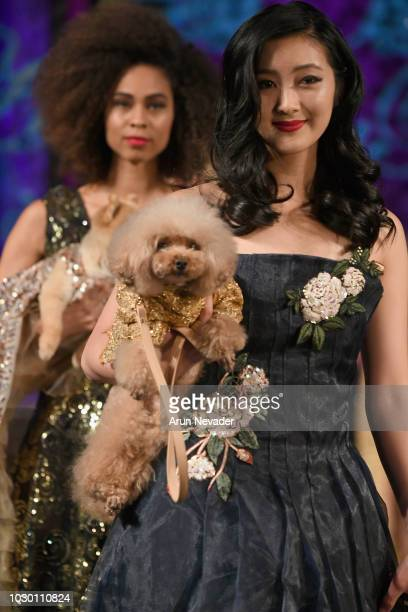 Models and dogs walk the runway during the ANTHONY RUBIO show at New York Fashion Week Powered By Art Hearts Fashion at The Angel Orensanz Foundation...