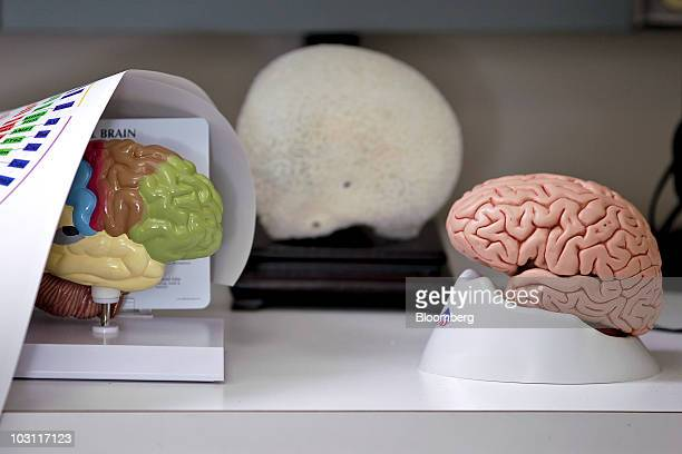 Models of human brains are seen in the lab of Dharmendra Modha manager of cognitive computing at the International Business Machines Corp Almaden...