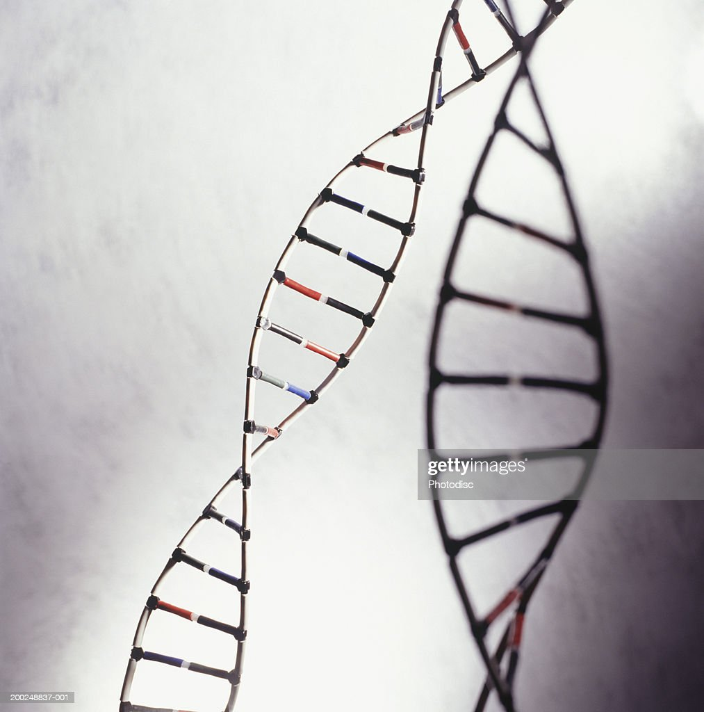 DNA models, (Close-up) : Stock Photo
