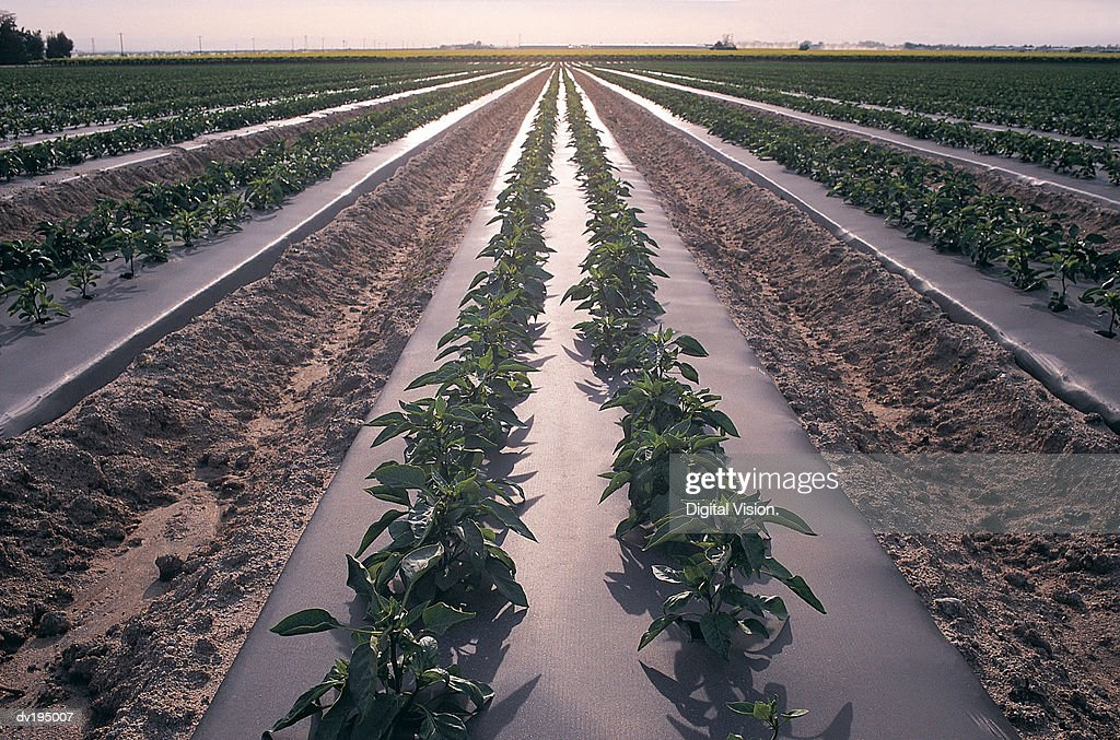 Modern farming : Stock Photo