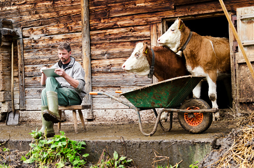 Modern Swiss farmer with digital tablet observed by his cattle - gettyimageskorea
