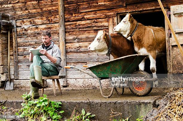 Modern Swiss farmer with digital tablet observed by his cattle