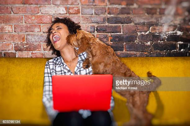 modern woman working from home - goldendoodle stock-fotos und bilder