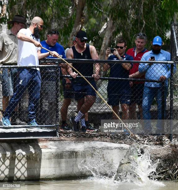 Moeen Ali of England feeds a crocodile during the England media opportunity on November 13 2017 at Billabong Sanctuary in Townsville Australia