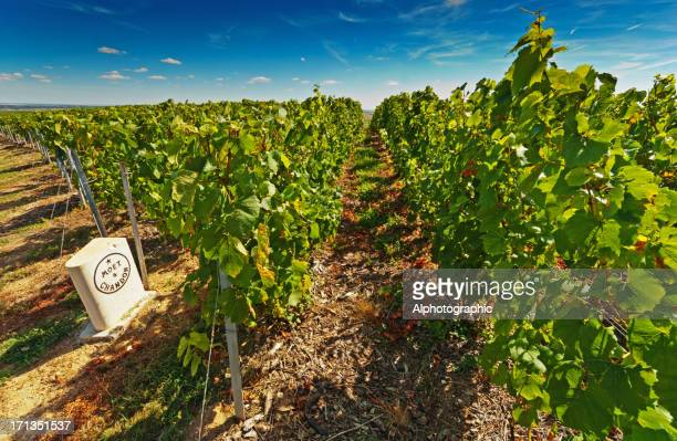 moet et chandon - ardennes department france stock photos and pictures