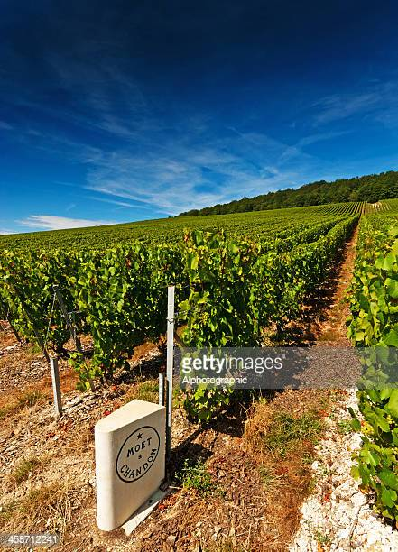 moet et chandon - marne stock pictures, royalty-free photos & images
