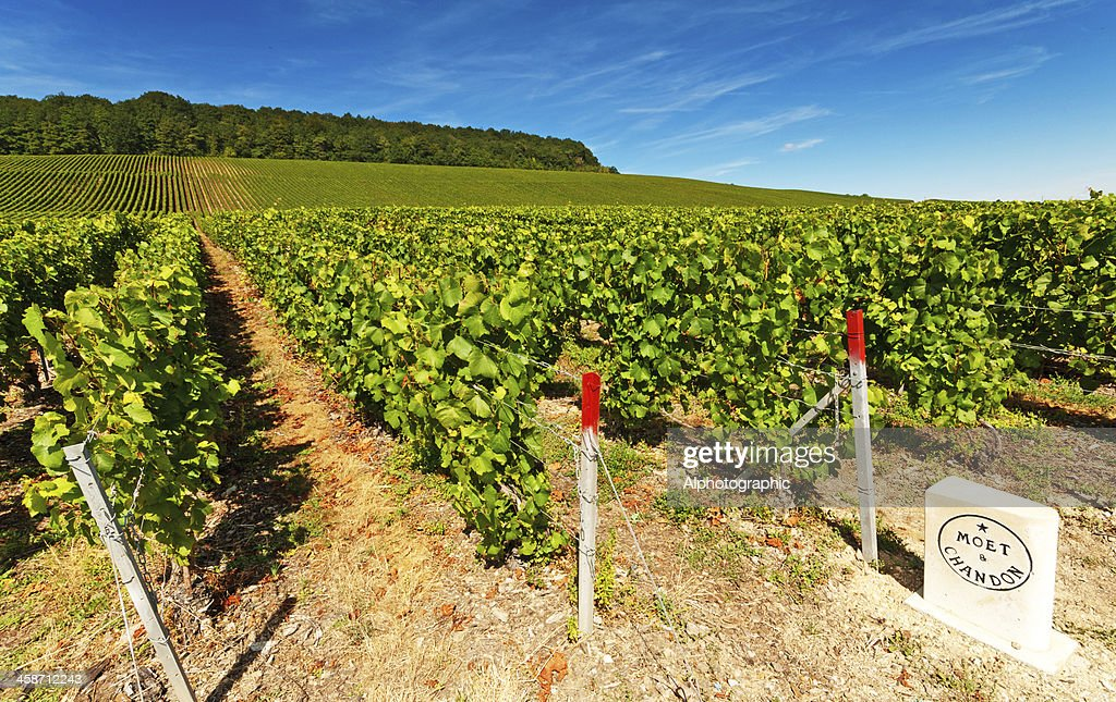 Moet et Chandon : Stock Photo