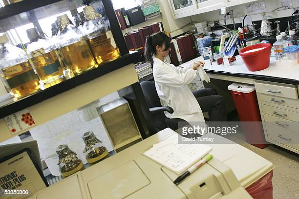 Moira Sauvane works as a cancer researcher at Columbia University May 24, 2005 in New York City. Javier Garcia, an Argentinian-American and a...