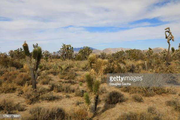 mojave desert - chihuahua desert stock pictures, royalty-free photos & images