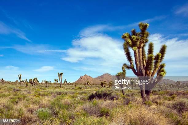 Mojave National Preserve: California, United States