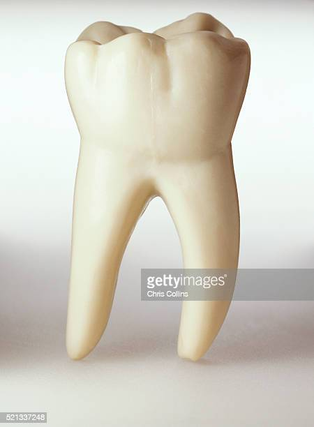 molar - molar stock pictures, royalty-free photos & images