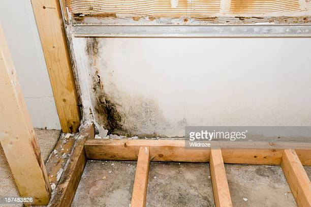 mold growing in basement bathroom - rotting stock pictures, royalty-free photos & images