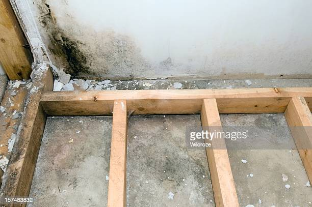 mold grows in basement bathroom - mildew stock photos and pictures