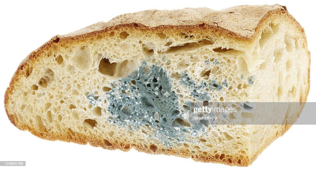 mold on bread : Stock Photo