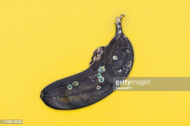 molded flattened banana on yellow background - rot stock pictures, royalty-free photos & images