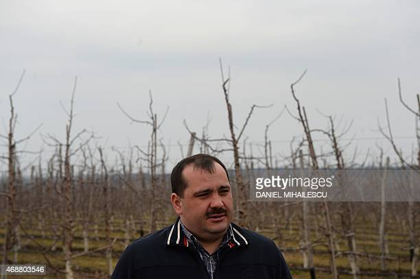 Moldovan apple grower Constantin Furculita poses on March 28 2015 in his orchard in the northern village of Racovat Furculita was dreaming of juicier...