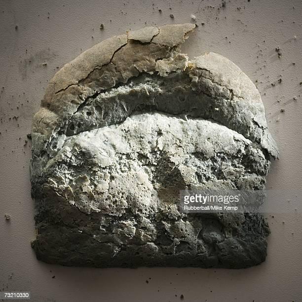 Moldy slice of bread