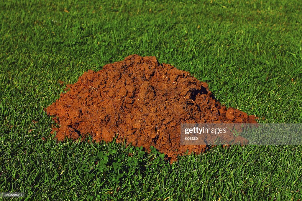 mole hill : Stock Photo