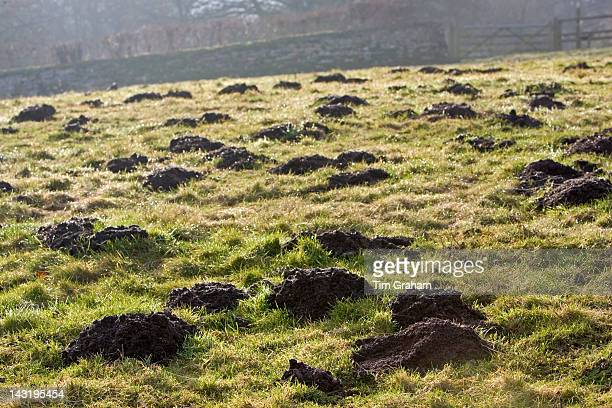 Mole hills Gloucestershire United Kingdom