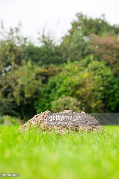 mole mound - claire plumridge stock pictures, royalty-free photos & images