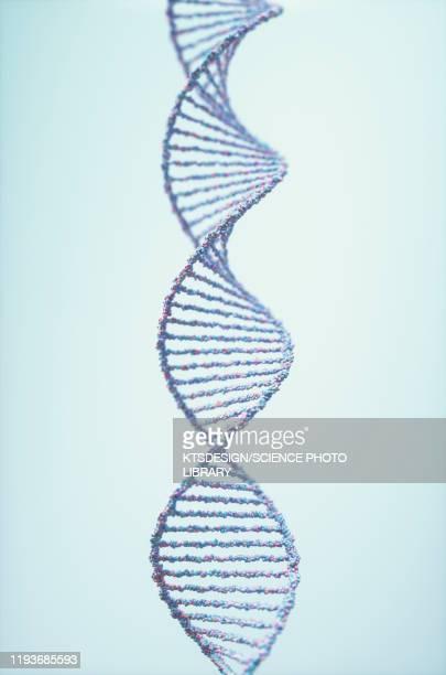 dna molecule, illustration - dna foto e immagini stock