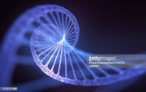 dna molecule, illustration - dna stock pictures, royalty-free photos & images