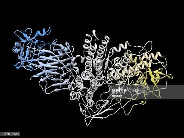 分子のボトックス