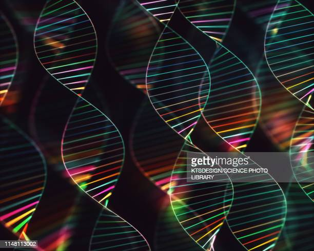dna molecules, illustration - dna stock pictures, royalty-free photos & images
