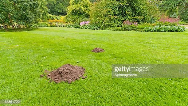 Molehills in einem formalen Garten