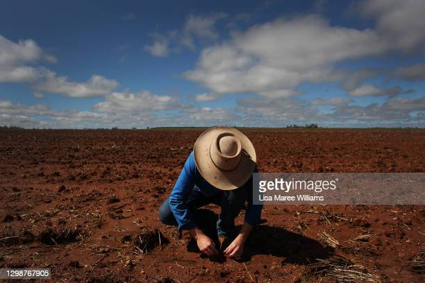 Molly Penfold checks on the progress of recently planted sorghum seedlings at 'Mamaree' on January 19, 2021 in Meandarra, Australia. COVID-19 and the...