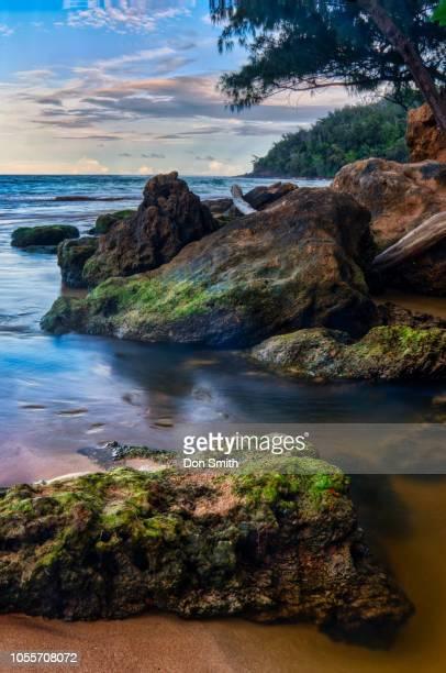 moloaa river and beach - don smith stockfoto's en -beelden