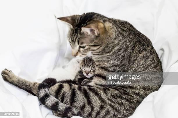 Mom and her newborn kitten