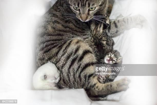 Mom and her three newborn kittens sleeping