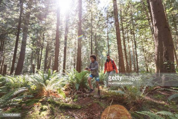 mom and son hiking through a glade with ferns - nature stock pictures, royalty-free photos & images