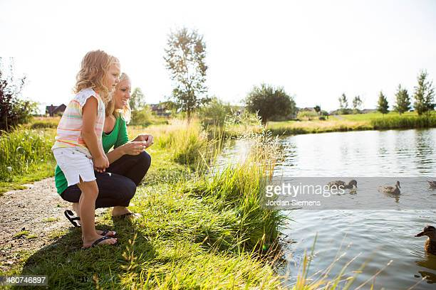 mom and young girl feeding ducks. - duck bird stock photos and pictures