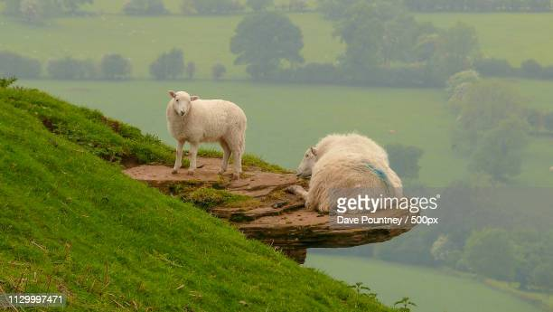 mom, get away from the edge ' - ledge stock pictures, royalty-free photos & images
