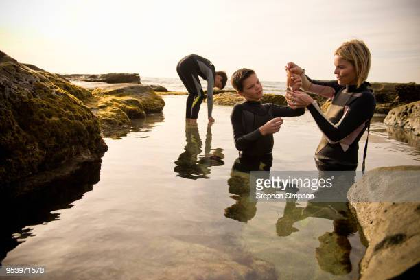 mom, sons explore tide pools in afternoon - tidvattensbassäng bildbanksfoton och bilder