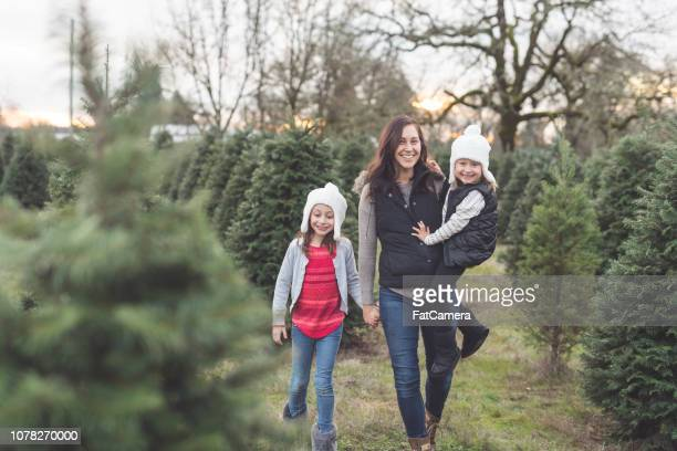 mom walks through a christmas tree farm with her daughters - tree farm stock pictures, royalty-free photos & images