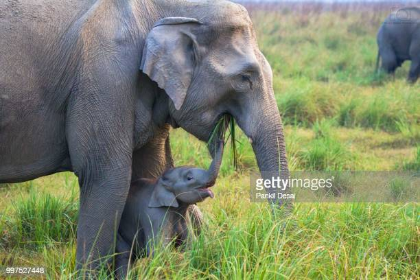 a moment beyond words - indian elephant stock pictures, royalty-free photos & images