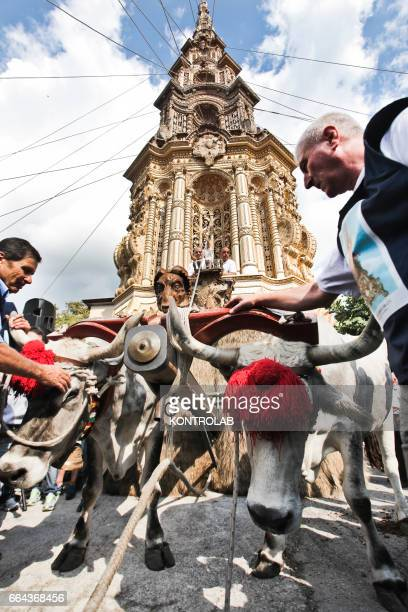 A moment during the farmer festival as volunteers help the oxen to carry a 25 meters wheat obelisk build in honor of Madonna Addolorata in Mirabella...